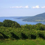 New York wine industry one of the fastest growing in the U.S.
